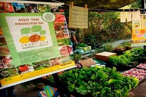 Programa fortalece produção agroecológica em Santa Clara do Sul