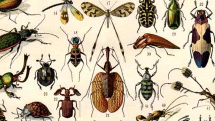 Aquecimento global vai estimular crescimento de insetos e pragas