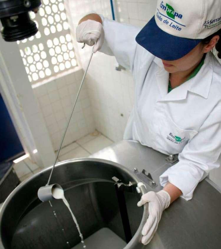 Embrapa lança curso EAD sobre produção de leite com qualidade