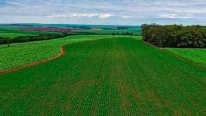Quem são os 20 maiores compradores do agro brasileiro