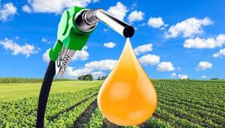 Bolívia autoriza biotecnologia para produzir biodiesel