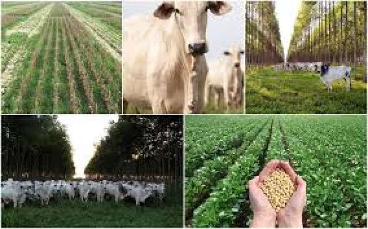 Integração lavoura-pecuária aumenta produtividade e beneficia qualidade do solo