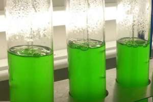 Herbicida natural pode substituir glifosato