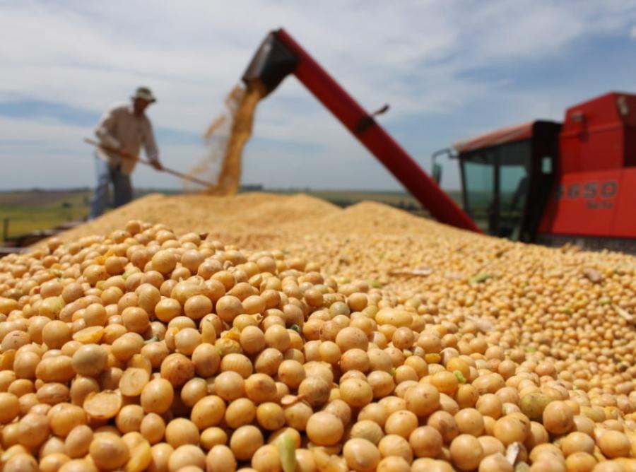 Chicago ainda não contabiliza perdas da soja no Brasil e próximos 15 dias serão determinantes para consolidação da safra