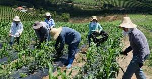 Há 70 anos Emater-MG estimula o desenvolvimento sustentável da agropecuária mineira