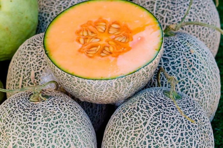 Pesquisa analisa viabilidade do cultivo semi-hidropônico de melão cantaloupe no Distrito Federal