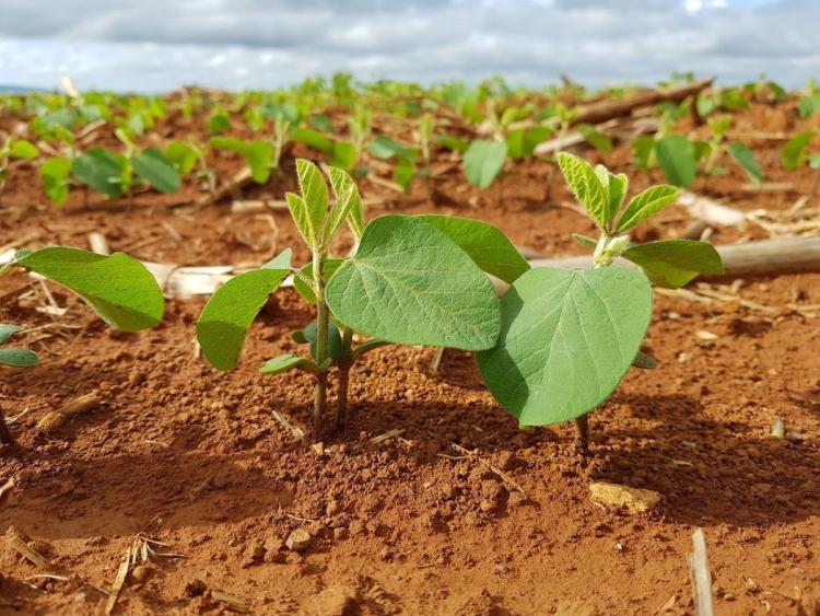 1º Encontro Técnico de Agricultura Sustentável de Campinas