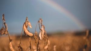 Brasil pode exportar menos soja e ter aceleração do milho, diz Agrinvest