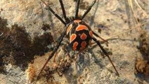 Veneno de aranha e fungos são os próximos biopesticidas