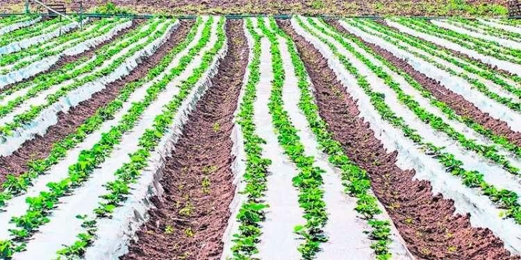 """""""Biodefensivos com micróbios do solo e planta são o futuro"""""""