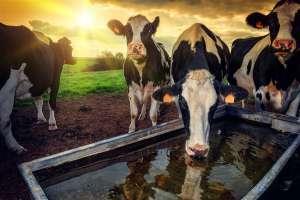 EducaPoint: Qual a temperatura ideal da água para consumo de bovinos?