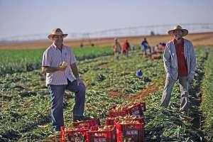Setor agropecuário lidera a criação de empregos no mês de abril em Goiás