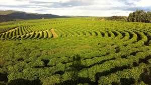 Agropecuária gerou mais de 37 mil empregos formais em maio