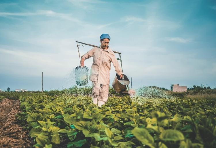 Glifosato: mitos e verdades sobre um dos agrotóxicos mais usados do mundo