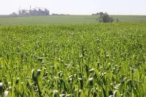Tecnologias na agricultura aumentam a produção em 20%