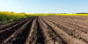 Resíduo de fósforo no solo pode ser estratégia de lucro