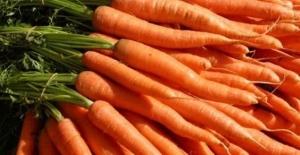 Estudo sobre cenoura busca entender salinidade