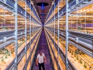 HOLANDA: Um país minúsculo que alimenta o mundo
