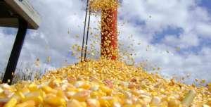 Exportação de milho pode chegar a recorde