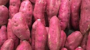 """Alemanha contribui para """"salvar"""" batatas peruanas"""