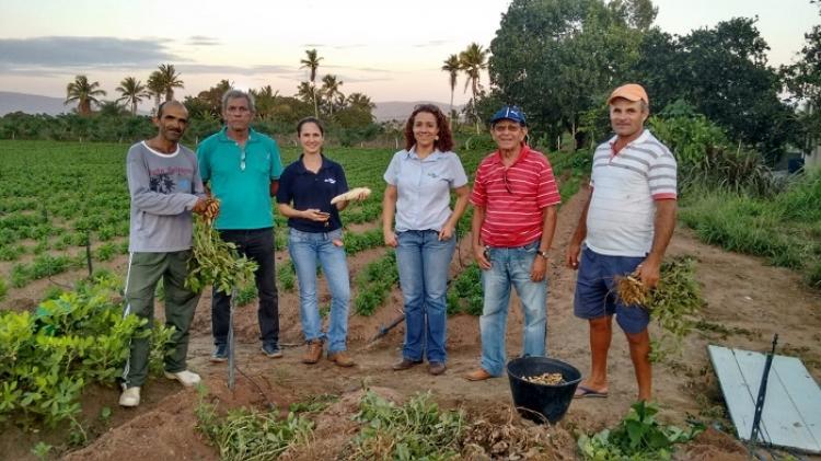 Prospecção em áreas de cultivo de batata-doce reforça alinhamento de pesquisas com demandas da cadeia produtiva
