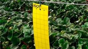 Fusão inicia nova geração no controle de insetos