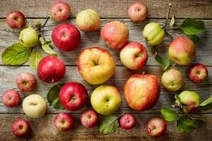 Cientistas desvendam mecanismo de percepção do frio na macieira