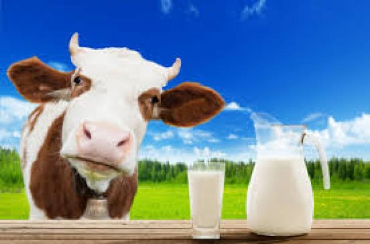 Quais são as vantagens e desvantagens da zootecnia de precisão na produção de leite?