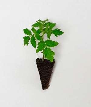 O uso do patrimônio genético no desenvolvimento de hortaliças