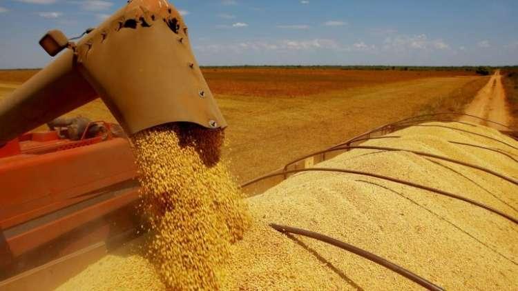 Soja em alta no Brasil alcança lucro médio de 8,15%