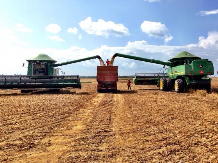 IBGE mantém crescimento de 6,8% na produção agrícola do Amapá em 2018