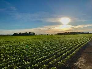 56 mil ha de propriedades rurais começam a ser fiscalizados pela Conab (MAPA)