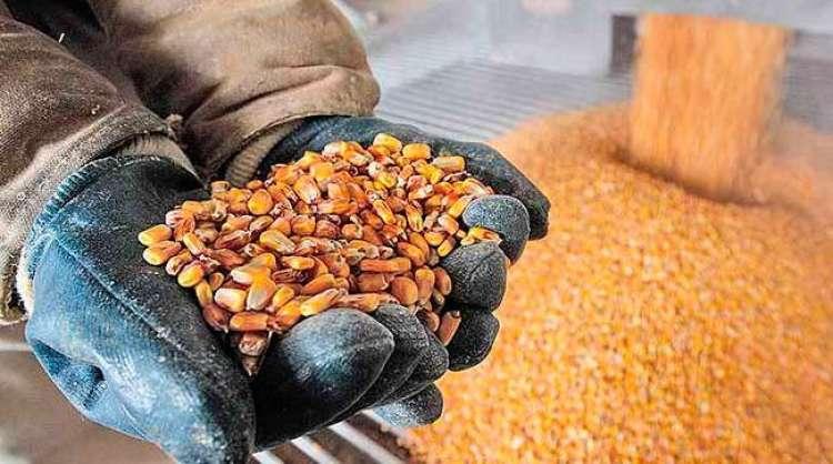 Mercado de etanol de milho atrai gigantes no País