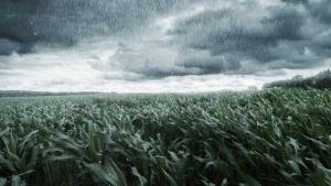 Previsão indica chuva em boa parte do país nos próximos dias