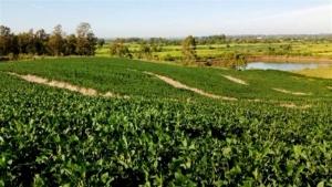 Prohort na Abracen revela mais de R$ 36 bilhões no comércio de frutas e hortaliças