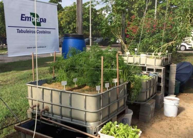 Integrar criação de peixes com hortaliças economiza 90% de água e elimina químicos