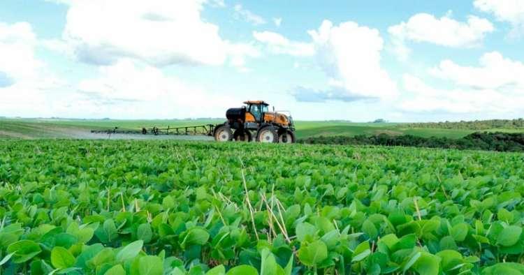 Anvisa vai reclassificar defensivos agrícolas que estão no mercado