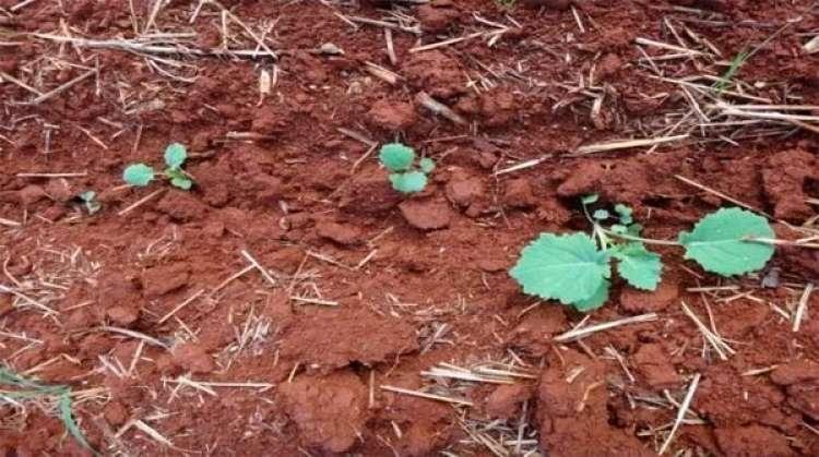Embrapa anuncia, na Emater-DF, técnica inédita para avaliar saúde do solo