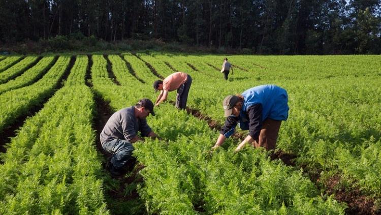Produtos da agricultura familiar terão descontos em financiamento