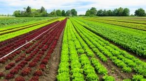 Importância da América do Sul para o futuro da agricultura