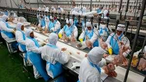 Ministra minimiza devolução de 16 contêineres com salmonela no último ano