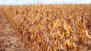 Mecanismo duplo regula a resposta das plantas à seca