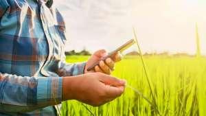 Big Data rural: tecnologias invadem o campo em busca de precisão