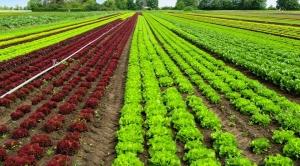Registro recorde de agroquímicos não é motivo pra euforia