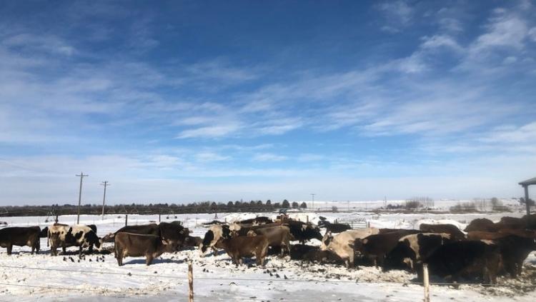 Fabricantes de fertilizantes dos EUA são prejudicados por clima adverso
