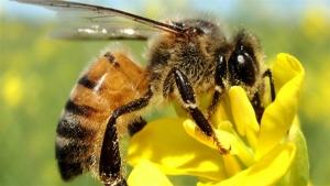 Ferramenta online é exemplo de cuidado com abelhas