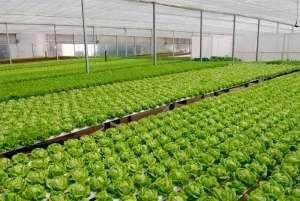 Mercedes-Benz inaugura Fazenda Urbana para plantio de hortaliças em fábrica de São Bernardo do Campo