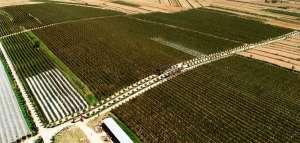 Netafim/Amanco lança sistema digital de irrigação