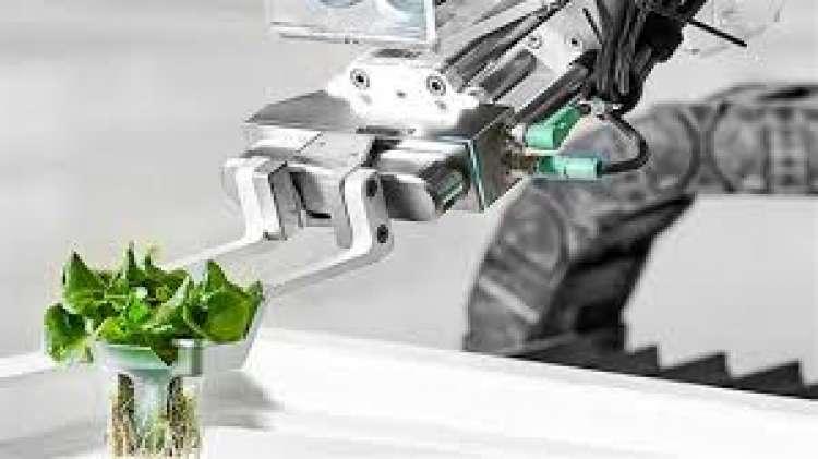Cientistas projetam robôs para preencher lacunas agrícolas