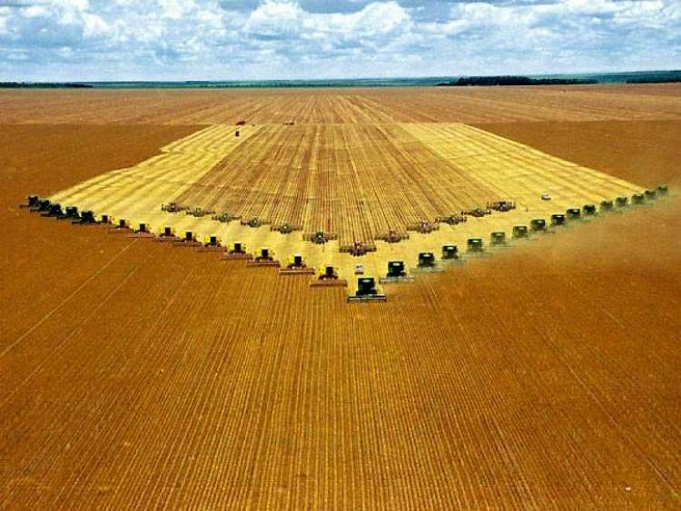 Preços mínimos têm reajuste médio de 7%, diz Ministério da Agricultura